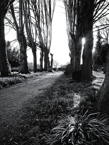 Trees Avenue Poplars Pathway Churchyard Silhouettes Black And White Monochrome Sunlight Through Trees Shadows Springtime Natures Diversities Monochrome Photography Perspectives On Nature Black And White Friday