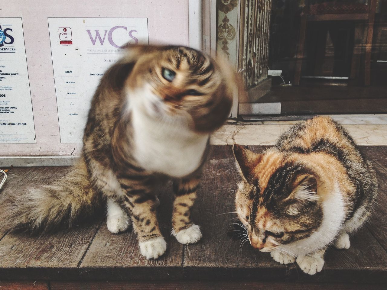 Close-Up Of Two Cats Sitting On Doorway