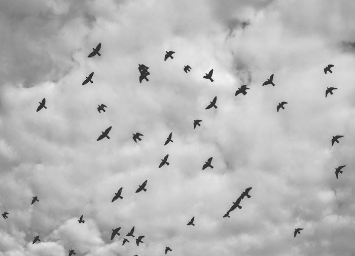 libertad EyeEmNewHere Silhouette Blackandwhite Bnw Bnw_life Bnw_captures Bnw_captures Bnw Photography Bnw_planet Sky And Clouds Skyporn Skylovers Skyandclouds  Flying Bird Flock Of Birds Cloud - Sky Sky Large Group Of Animals Silhouette Outdoors Animal Wildlife Animals In The Wild First Eyeem Photo