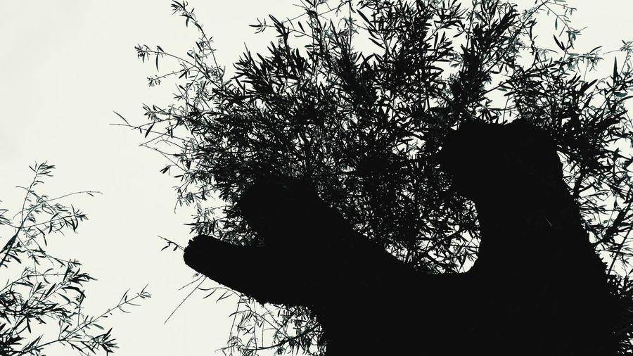 Blackandwhite PhotographyTree Trees Relaxing Calm First Eyeem Photo Shadows & Lights Leaf LeaftRelaxing Moments Relax Yin Yang Yin Yang Abstractions Yingyang Backlighting Monochrome Balance Minimalobsession Minimalism
