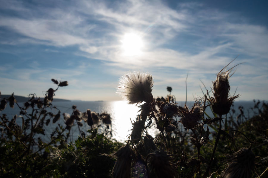 Beauty In Nature Coast Coastline Life Nature Plant Seeds Sun Sun And Clouds Sunlight