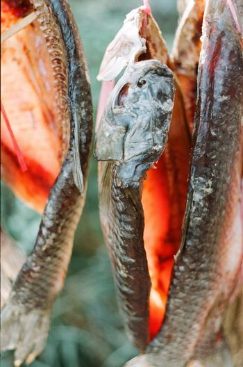 Close-up of dried fish