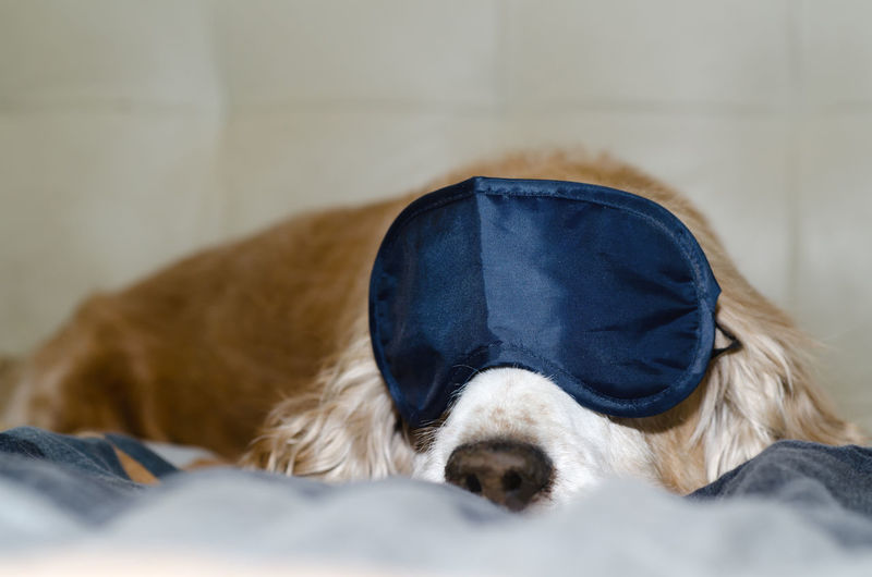 Close-up of dog with eye mask sleeping on bed