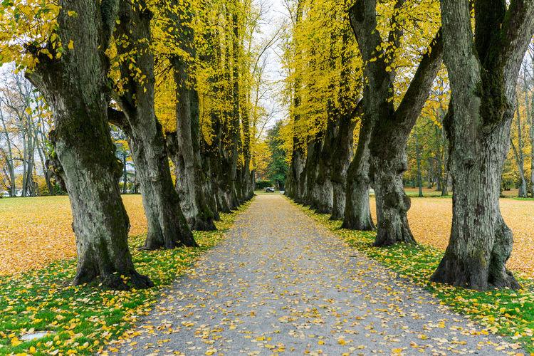Autumn is here.. Autumn EyeEm Selects EyeEm Nature Lover EyeEm Gallery EyeEm Best Shots Tree Tree Trunk Autumn Pathway Treelined Narrow Walkway The Way Forward Empty Road Long Growing Fall
