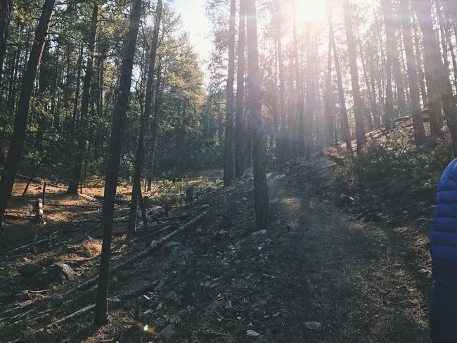 Hiking Hiking Adventures Hiking Trail Tree Nature Forest Sunlight Outdoors WoodLand Scenics Tranquil Scene Day Beauty In Nature Sun Sunbeam Landscape Woods The Great Outdoors - 2017 EyeEm Awards