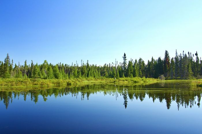 Taking Photos Check This Out Lake Pond Reflection Water Reflections Mirror Symmetry Axis Forest Hugging A Tree Tree Trees Outdoors Green Blue Sky Day Weather Sun Sunny Day Tranquility Calm Relaxing Winding Road