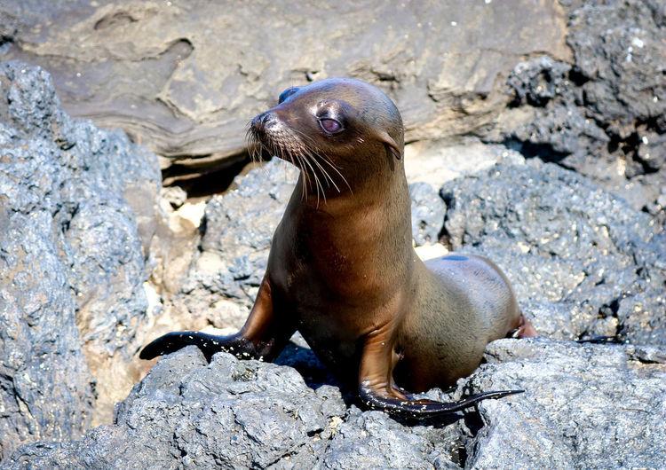 Sea lion on rock