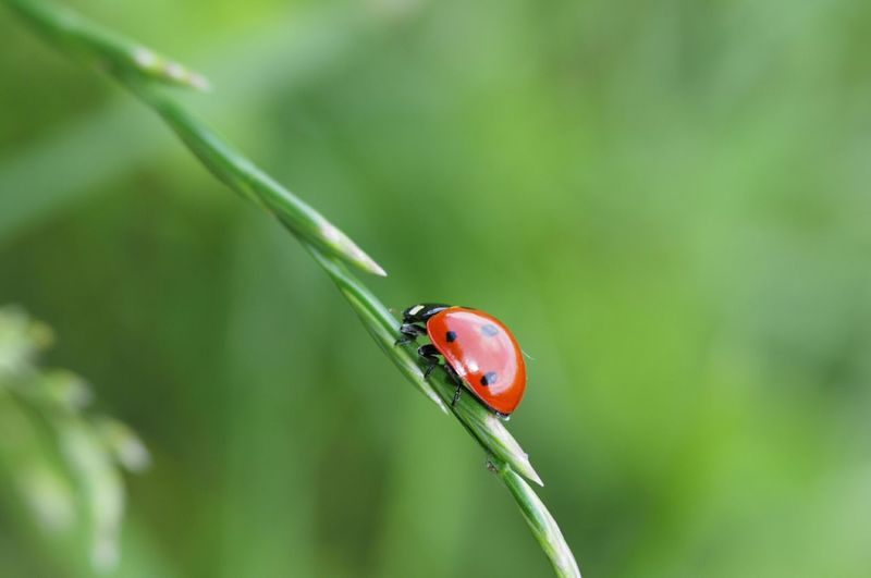 Close-up of lady bug on leaf