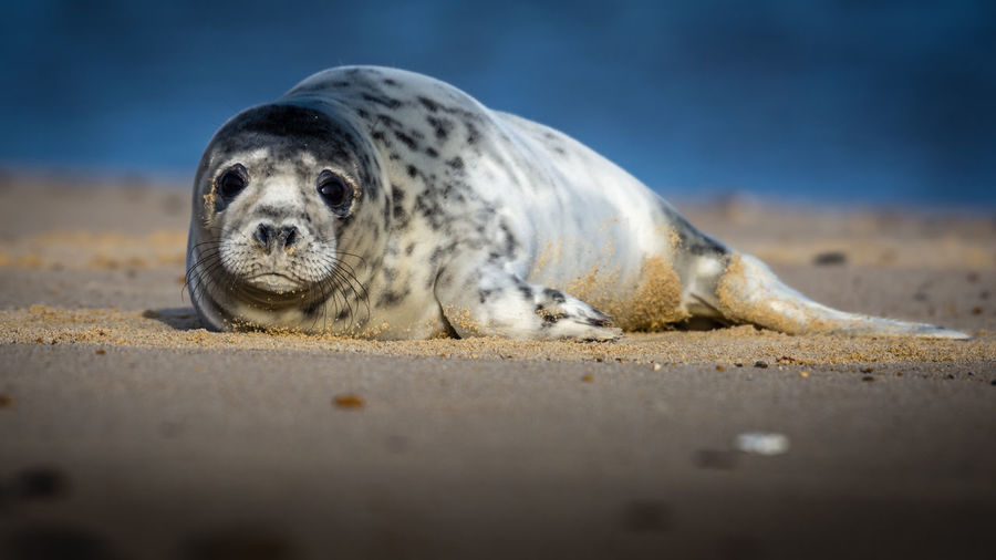 Close-up of a animal resting on beach