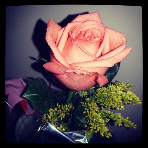 E ela não passava de uma mulher... linda, delicada, vívida, intensa, inconstante, flor e borboleta Felizdiainternacionaldasmulheres Parab énsmulheres Obrigadapapai