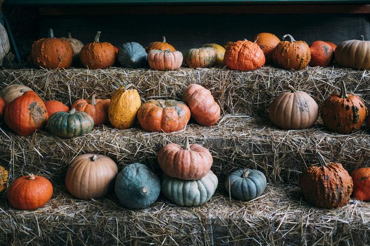 Various pumpkins on display