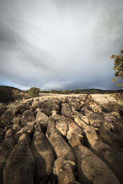 Countryside lifestyle in the province of Soria SPAIN Soria Animal Animal Themes Beauty In Nature Cloud - Sky Countryside Day Fields Landscape Mammal Mountain Nature No People Outdoors Rock - Object Scenics Sheep Sheeps Sky