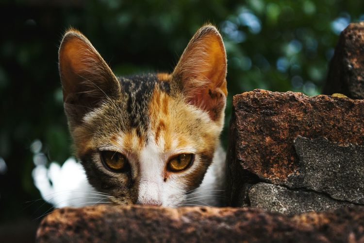 Close-up portrait of cat on rock