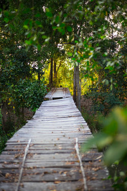 Autumn Bridge - Man Made Structure Brigdeovertroutwater Evening Light Footpath Hope Pathway To Heaven The Way Forward