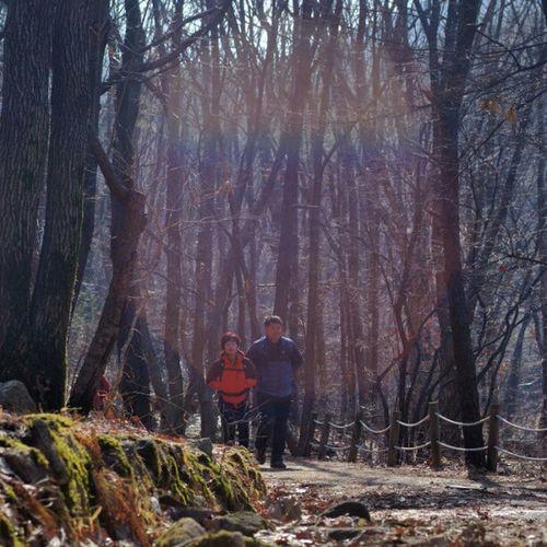 . Two is better than one Korea Seoul_korea Fujifilm S5pro people walk forest mountain instagood instamood picoftheday robin_theme