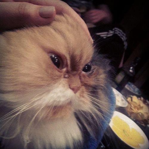 :D Miau