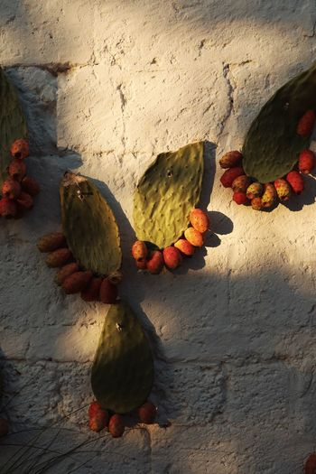 Close-up of fruits on wall