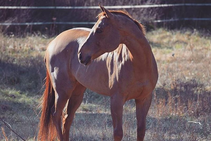 🌲🌿Forestphotography Horses Pony Equestrian Horsephotography Equinephotography Nature Naturephotography Northcarolina Ncphotography Mypictures Equestrianlife Horselover Naturephotos 🌿🌲