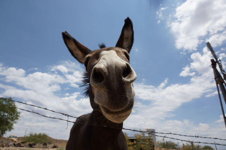 Low Angle View Of Donkey Against Cloudy Sky On Sunny Day