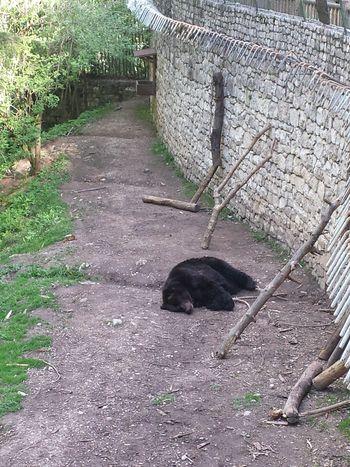Animal Themes One Animal No People Outdoors Day Orso Sleep