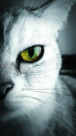 Colour Splash Cat Eye Macro Cat Cat Lovers Cats 🐱 Moody Cat Green Eyes EyeEm Cats EyeEm Animal Lover Eyeem Photography