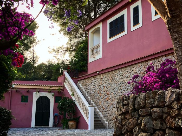 House and pink flowering tree by building