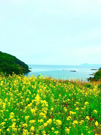 Nature Growth Beauty In Nature Flower Clear Sky Sea Plant Water No People Tranquility Scenics Outdoors Day Sky Fragility Freshness