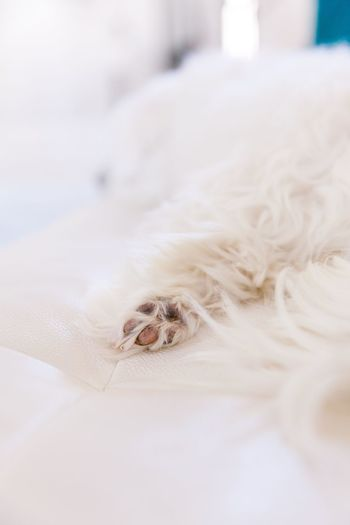 Close-up of a dog on bed
