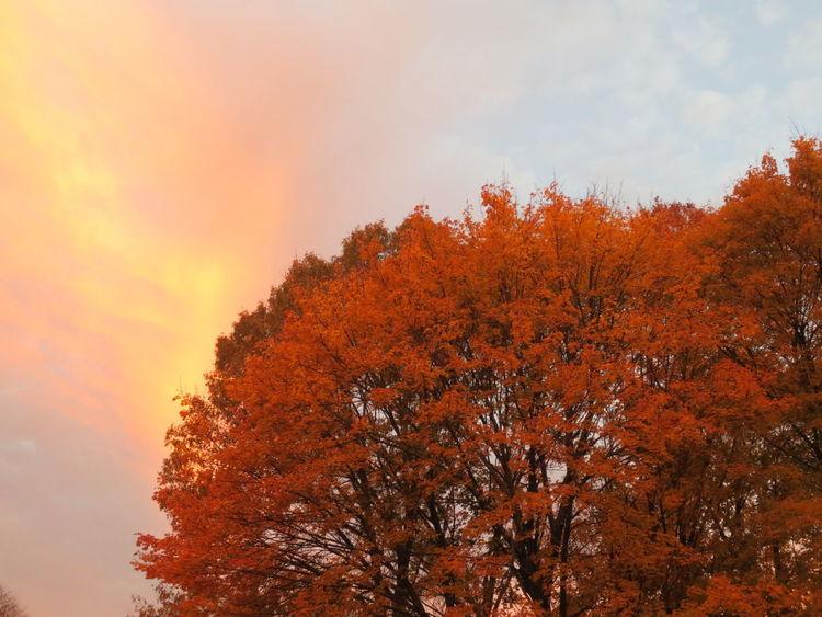Autumn Autum Skys Orange Sky Fire Sky Color Leaves And Sky Trees Nature