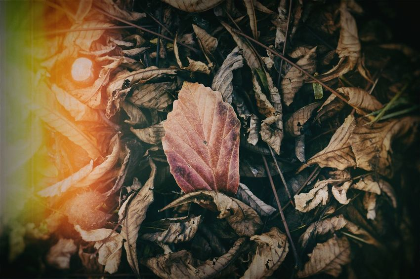 Leaf Nature Beauty In Nature Close-up Autumn Fragility Plant Light And Shadow Autumn Leaves Lonlyness EyeEm Gallery Our Best Pics Autumn Autumn Colors Autumn Collection Leafs Autumn Leafs Nik Collection VSCO Retro Oldschool Lomography Beauty In Nature Maximun Closeness Nature