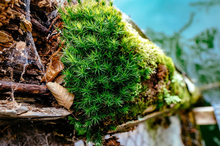Close-Up Of Plants Growing On Moss