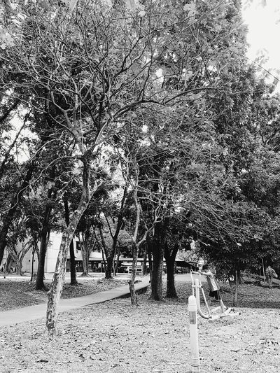 Black & White Growth Philippines Adapted To The City Exercise Fun Times ♥ Elliptical Challange Youth Trials