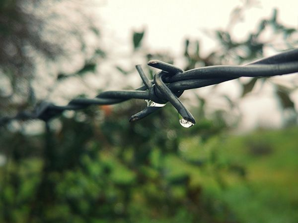 Rain Rainy Days Drop Close-up Barbed Wire Water Drop Wet Droplet Rainfall