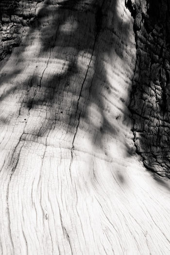 High angle view of tree shadow on wooden floor