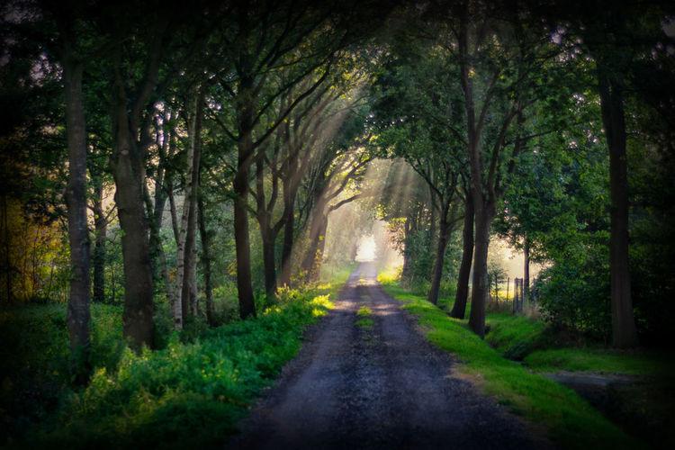 Weg Tree Forest