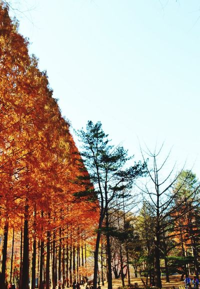 Showcase: November Fall