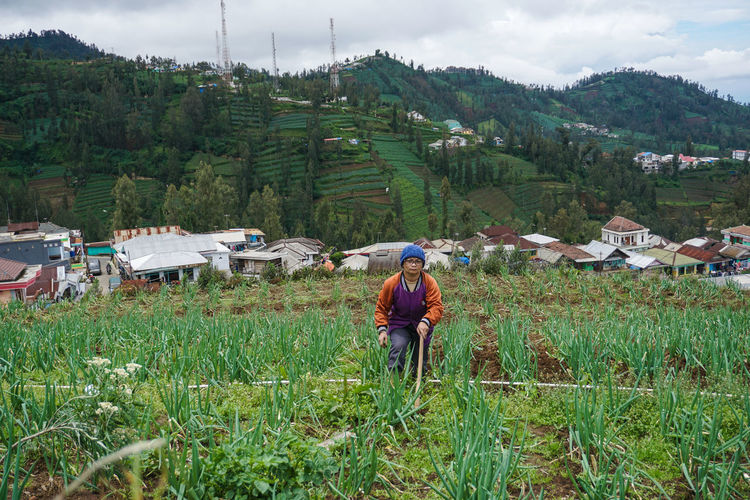 The farmer is working alone in his garden, Mount Bromo. Plant Real People Field Green Color Land Landscape Growth Rural Scene Agriculture Nature Environment Occupation Farm Architecture Day Mountain Grass Beauty In Nature Working Farmer Outdoors Farmer Farmers Potato Potatoes