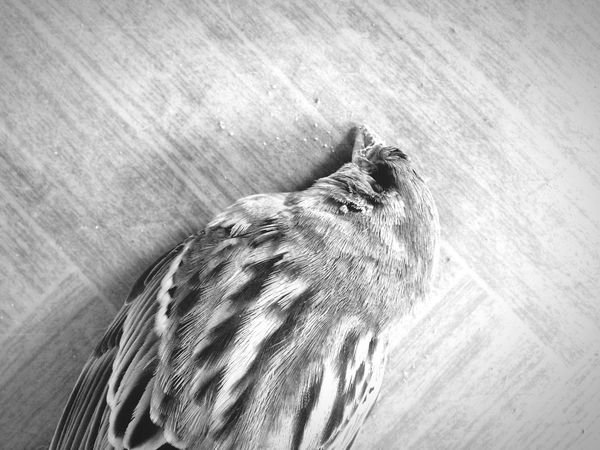 Blackandwhite Bird Dead Silence Rip Circleoflife Still Life