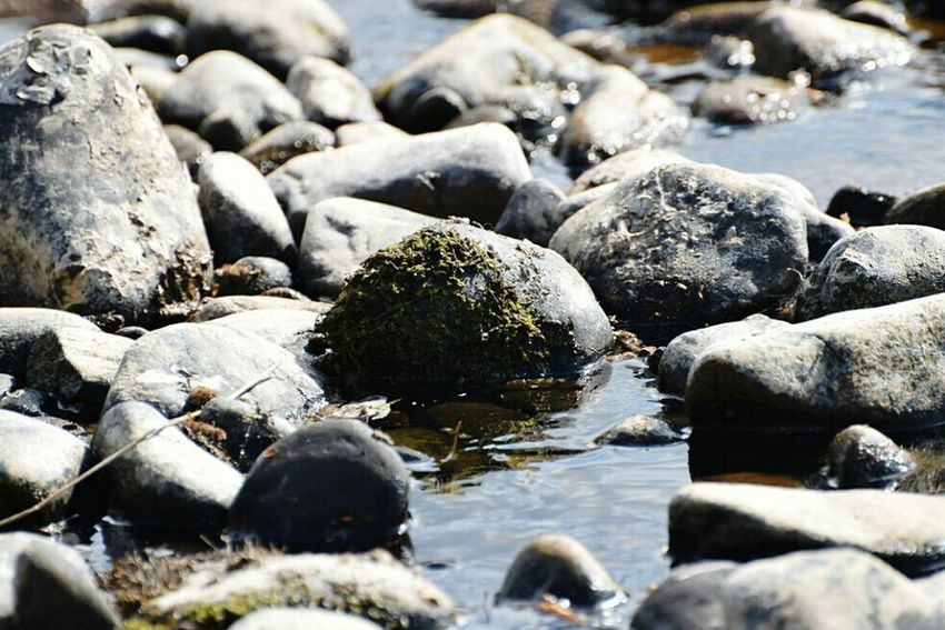 Simple pic Riverside Taking Photos EyeEm Best Shots Justgoshoot Bellingham Northumberland Country Life Mypic Wildlife & Nature Rivertyne