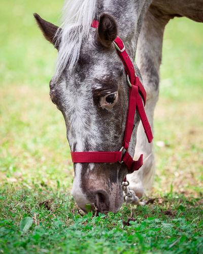 Portrait Red Pets Close-up Grass Horse Horseback Riding Horse Racing Stable Pony Farmland