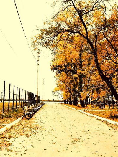 Осень Tree Sky