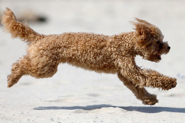 Dog running on land