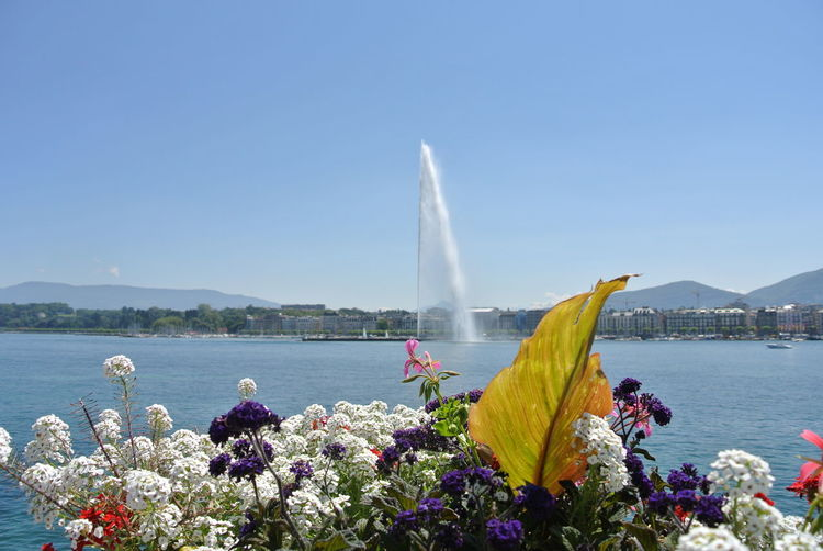 Fontain Water No People Day Flowers Colors Lake View Switzerland Nofilter Perspectives On Nature