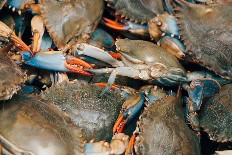 Crabs Chinatown Crab Seafood Animal Close-up Crab Crabs Crustacean Day Fish Fish Market Food Food And Drink For Sale Freshness Healthy Eating High Angle View Indoors  Market No People Raw Food Retail  Seafood Vertebrate Wellbeing
