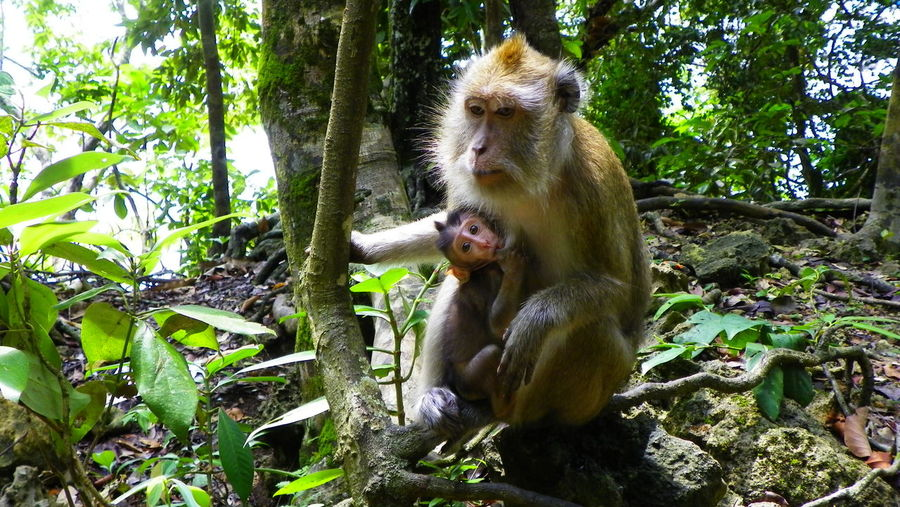 Macaques, mum and the baby, Bali, Indonesia Animal Family Animal Themes Animal Wildlife Animals In The Wild Bali Care Close-up Day EyeEmNewHere Feeding  Feeding Animals Forest Macaque Mammal Monkey Nature No People Outdoors Primate Sitting Togetherness Tree Young Animal