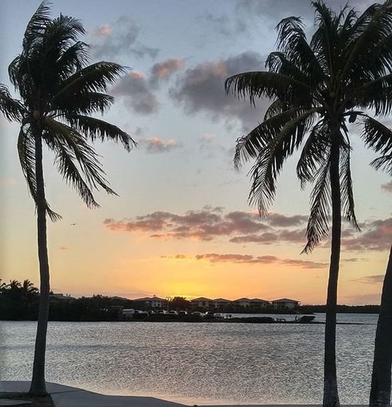 Sunset Tropical Florida Sunsetsniper Palmtrees Skyporn Primeshots Igoftheday Igpowerclub
