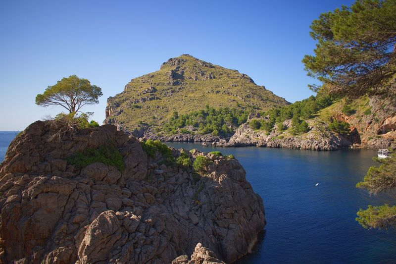 Sa Calobra Mallorca Plant Sky Tree Water Nature Beauty In Nature Clear Sky Tranquility Scenics - Nature No People Tranquil Scene Non-urban Scene Outdoors Sea Rock Day