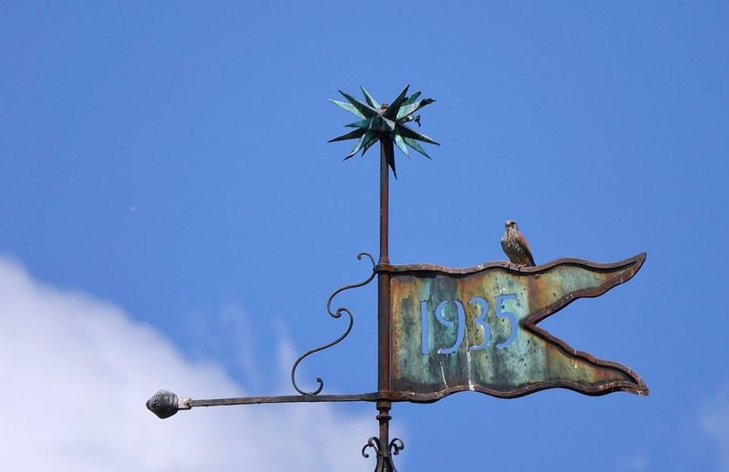 Turmfalke auf Wetterfahne Kirchturmspitze blauer Himmel Wolken Telezoom Turmfalke Blue Sky Weather Vane Nature Clear Sky No People Low Angle View Animal Representation Representation Direction Guidance Day Communication Outdoors Metal Sign Art And Craft Creativity Text Arrow Symbol
