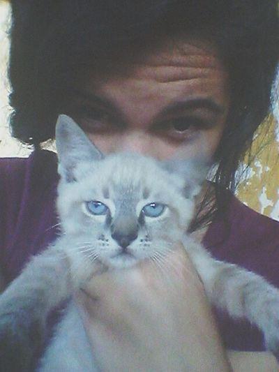 First Eyeem Photo cat Animal Cat Cute Pet Blue Animals