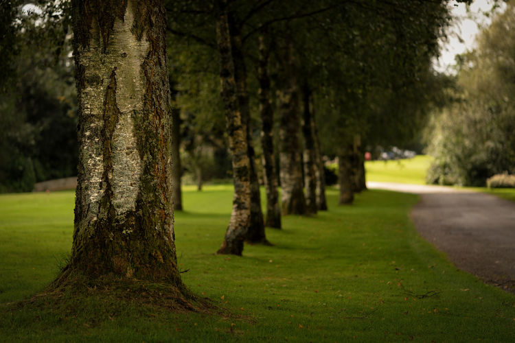 Tree, this